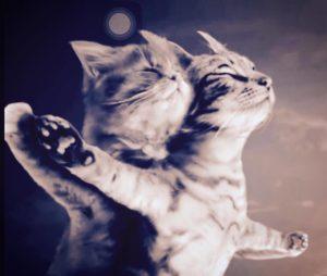 gatos dançando